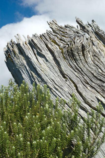 O vento sussurra algo ao arbusto que roça o velho e cansado tronco.