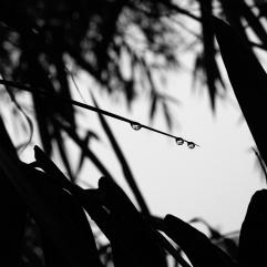 © Fernando Pires
