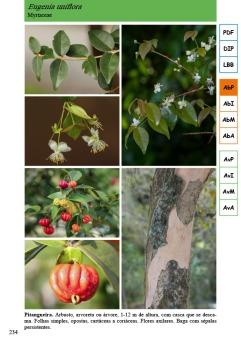 Guia_FloraRestinga_2017-234 copiar