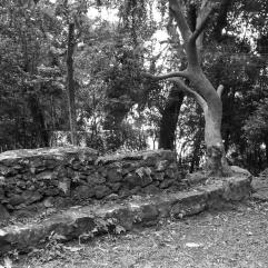 Engenho da Costa da Lagoa, foto Aurora Lopes dos Reis