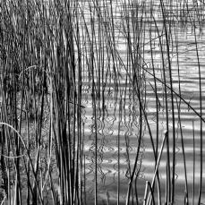 Lagoa dos Patos, foto de Arthur Costa.