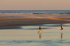 Talha-mar na Barrinha do Estreito. Foto de Arthur Costa.