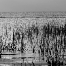 Lagoa dos Patos. Foto de Mirian Nashiro.