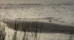 Lagoa dos Patos, foto de Rogério Knebel.