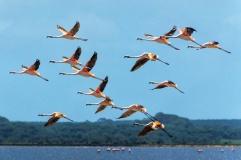 Flamingos, foto de Ronaldo Andrade.