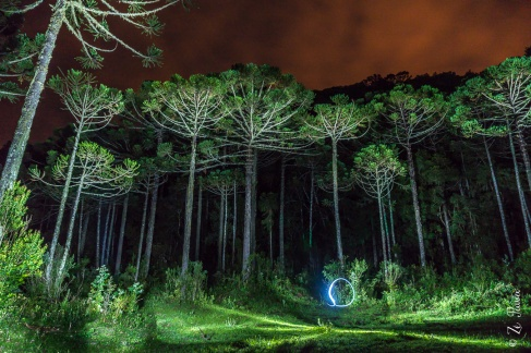 Light painting em floresta de araucárias.