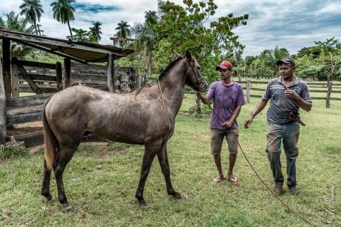 Sobrinho do Seu Jorge domando cavalo