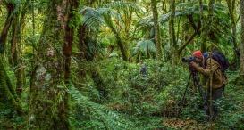 Floresta de xaxins na trilha para a Cachoeira do Avencal. Foto de Maurício Paiva