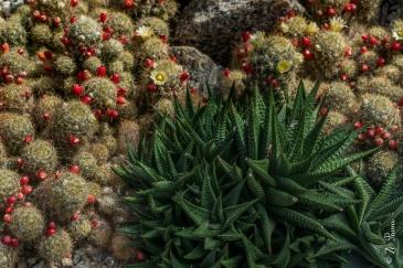 Cactário no Jardim Botânico