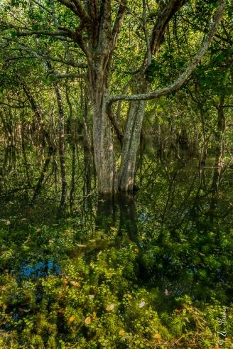 Floresta inundada, Lagoa da Confusão, Tocantins - foto de Zé Paiva