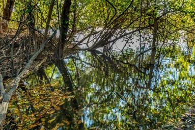 Lago de Dentro, Parque Estadual do Cantão, Caseara, Tocantins - foto de Zé Paiva