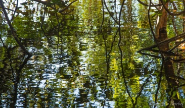 Parque Estadual do Cantão - foto de Rogério Knebel
