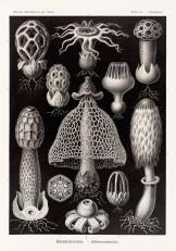 Desenhos de Haeckel.