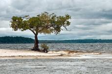 Ponta de areia na Praia do Tupé, Rio Negro, na comunidade de São João do Tupé, na Reserva de Desenvolvimento Sustentável (RDS) do Tupé. Foto de Du Zuppani