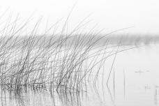 Lagoa de Bacopari, Mostardas, Rio Grande do Sul - foto de Ze Paiva - Vista Imagens