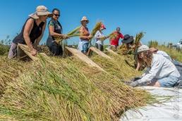 Mulheres debulhando arroz orgânico no assentamento Filhos de Sepé, Viamão, Rio Grande do Sul.